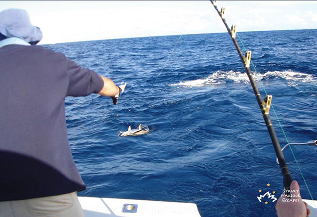 Offshore Fishing Tours Sydney Image 5