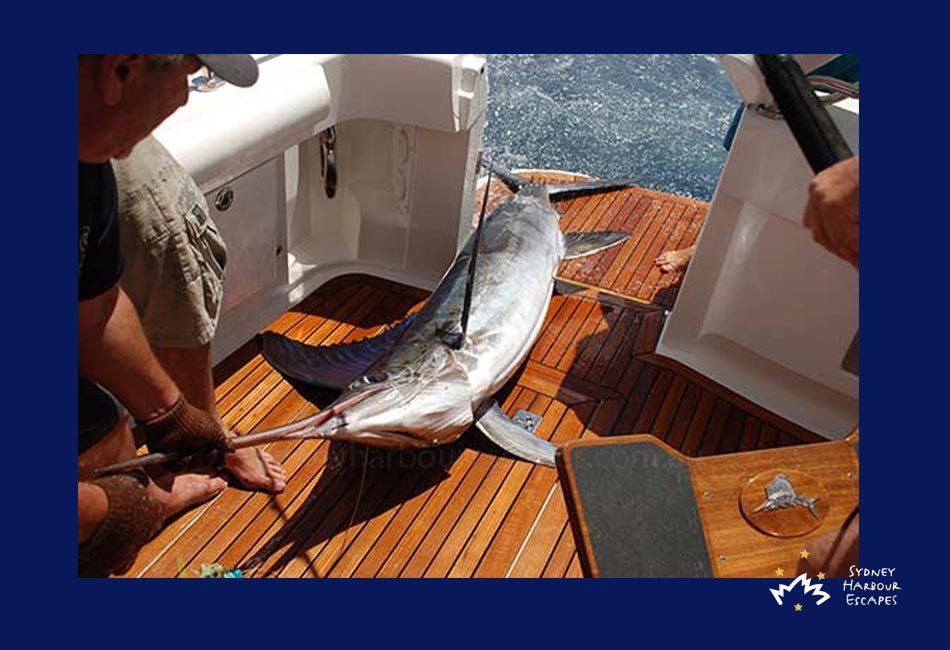 Pisces boat hire private fishing charter sydney harbour for Fish catching games