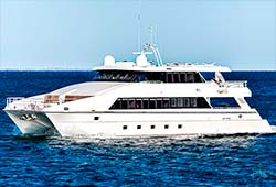 OCEAN DREAM 80' Luxury Catamaran Private Charter