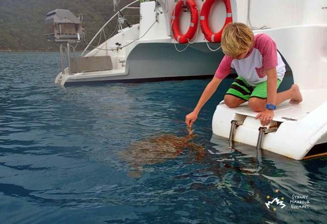 Max feeding turtle in Whitsundays