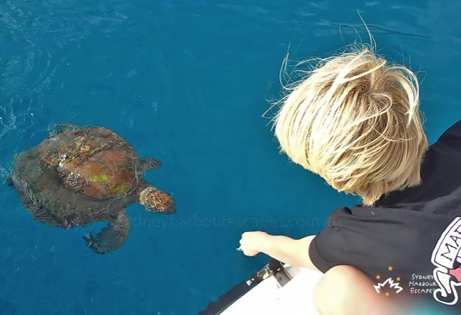 Playing with Turtle 1 Whitsundays