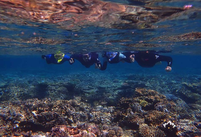 Sydney Sundancer four Snorkelling Whitsundays