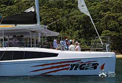 Tiger 4 6 on Charter