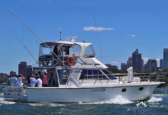 YACKATOON 50' Game Fishing Charter